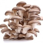 OysterMushroomCluster 150x150 FRESH MUSHROOMS